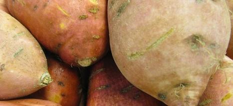 La patate douce, le légume de l'espace | petite courgerie | Scoop.it