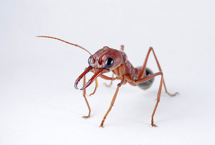 GPS Tracking Systems Show Ants Have Issues Finding Their Way Home at Night | Real Time GPS Tracking Devices | Scoop.it