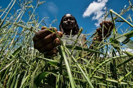 Food security and carbon hoofprints   Thomson Reuters Foundation   CGIAR Climate in the News   Scoop.it