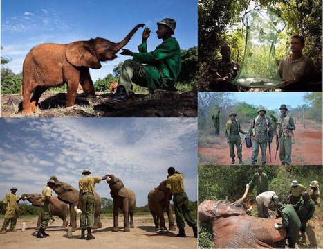 Orphaned Elephants are Rescued, Rehabilitated and Released Back Into the Wild | Le It e Amo ✪ | Scoop.it