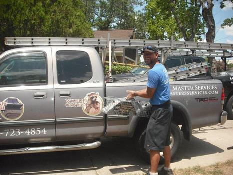 #WildlifeRemoval in #Houston - Our Tech Brian safely removing a #Raccoon. | Chimney & Fireplaces | Scoop.it