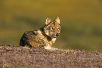 Actividad humana ha puesto en peligro de extinción a 25% de los mamíferos | TUL | Scoop.it