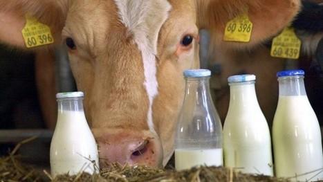 Milchpreis - Warum die Bauern keinen Grund zum Jammern haben | Stellenanzeigen Agrarwissenschaften | Scoop.it