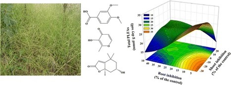 Crabgrass (Digitaria sanguinalis) Allelochemicals That Interfere with Crop Growth and the Soil Microbial Community - Journal of Agricultural and Food Chemistry (ACS Publications)   plant cell genetics   Scoop.it