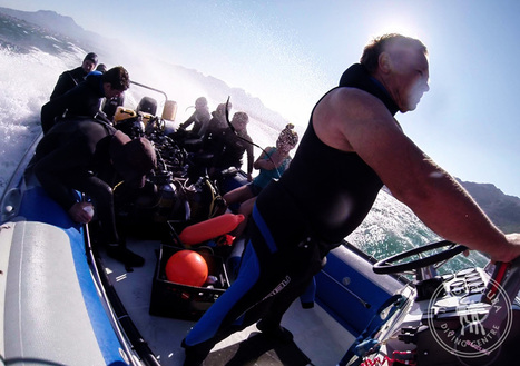 15 Things NOT To Say On A Dive Boat | Indigo Scuba | Indigo Scuba | Scoop.it