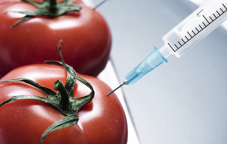 GMO Bill Signed Into Law - Guardian Liberty Voice | GMOs: The Untold Story | Scoop.it