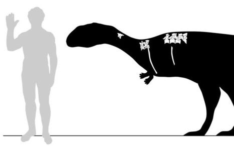 New species of dinosaur discovered: the lonely small bandit - Telegraph | Science is Cool! | Scoop.it