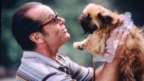 ¿Los perros tienen Trastornos Obsesivos Compulsivos?… Ah ... | Mas mascotas | Scoop.it