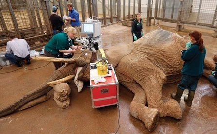 African Elephant's Cataract Operation Is The Biggest Eye Surgery Ever | Quite Interesting News | Scoop.it