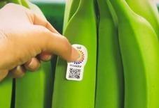 En Équateur, des QR codes collés sur les bananes favorisent le tourisme - HelloBiz | T'as la bannanne couzain ! | Scoop.it