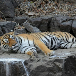 Splendors of Majestic India Tours | Rajasthan Wildlife Tours | India tour packages | Scoop.it