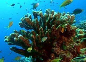Sous la majestueuse barrière de corail | Protection des Océans | Scoop.it