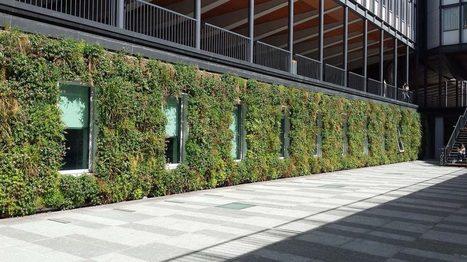 La végétalisation des murs | Dans l'actu | Doc' ESTP | Scoop.it