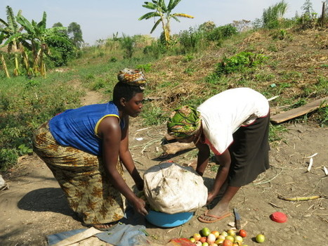 Development in Uganda: Women and Land Beyond 2015 - Enanga | NGOs in Human Rights, Peace and Development | Scoop.it