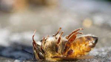 Les abeilles meurent plus en Belgique et en France | Biodiversité | Scoop.it