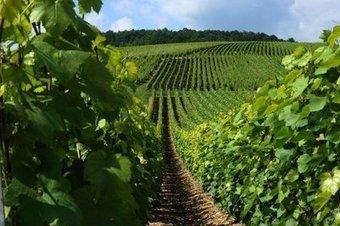 AOC / Les producteurs en congrès à Reims | Le vin quotidien | Scoop.it
