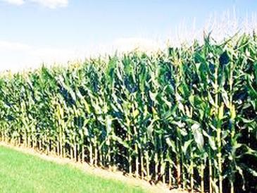 Bientôt un plan national d'investissement agricole en RDC   Questions de développement ...   Scoop.it