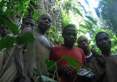 First estimate of Pygmy population reveals their plight | Confidences Canopéennes | Scoop.it