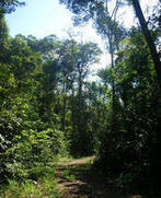 Climat | 20 ans suffisent pour que les forêts d'Amazonie reconstituent leur stock de carbone | Ecosystèmes Tropicaux | Scoop.it
