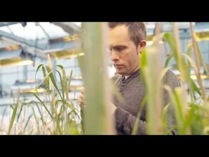 Plant Breeding Matters! | Agricultural Biodiversity | Scoop.it
