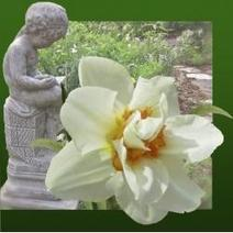 My Victorian Garden in Spring: Heirloom Daffodils and Other Bulbs | Gardening with Heirloom Plants | Scoop.it