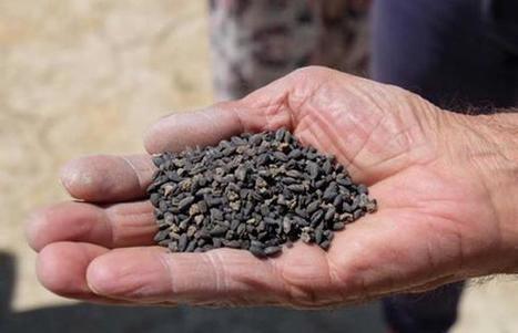 Se plantarán semillas de hace 2.800 años recuperadas en un antiguo castillo de Turquía | Centro de Estudios Artísticos Elba | Scoop.it
