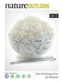 Nature Outlook : Rice   Genetic engineering and Human genetics, background reading and resources for IB   Scoop.it