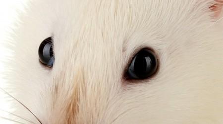 Scientists run eye cells through an inkjet printer | Slash's Science & Technology Scoop | Scoop.it