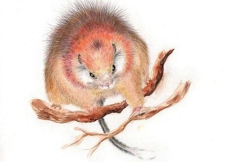 Un magnifique rongeur rouge porté disparu en Colombie | Biodiversité & Relations Homme - Nature - Environnement : Un Scoop.it du Muséum de Toulouse | Scoop.it