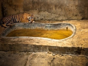 Photos Expose: A sobering look at zoo captivity around the world | Animals in Captivity | Scoop.it