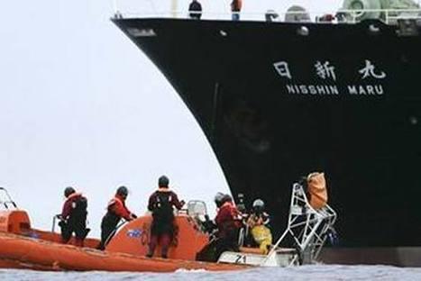 16 Chasseurs de Baleines Japonais dévorés vivants par des Orques   pachou39   Scoop.it