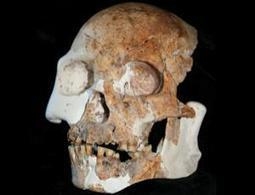 Chinese human fossils unlike any known species - life - 14 March 2012 - New Scientist | Bioslogos | Scoop.it