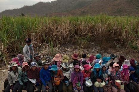 Quand les lois privent les paysans de leurs terres : la réforme agraire à rebours de l'Asie | Questions de développement ... | Scoop.it