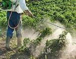 Parkinson,  aumenta il rischio del 60%  <br/>con l'esposizione a pesticidi e solventi   Neuroscienze e Psicologia   Scoop.it