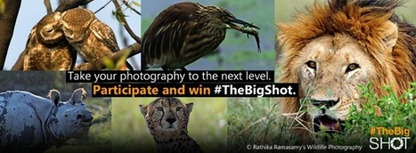 Microsoft's Bing Lets Amateur Photographers Take #TheBigShot, Winning Photos To Feature On Home Page - Business 2 Community | Digital-News on Scoop.it today | Scoop.it
