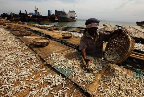 Ocean acidification will cut food and jobs in poor countries - scientists | Food issues | Scoop.it