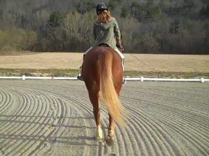 Elastic Rein Connection at the Walk. Camille Beatty and Marco Polo #2   Horse and Rider Awareness   Scoop.it