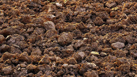 Restoring Global Soil Quality Is One Of The Best Things We Can Do For Climate Change | Biomimétisme - Biomimicry | Scoop.it