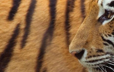Adopt an animal | WPSC Endangered Species | Scoop.it