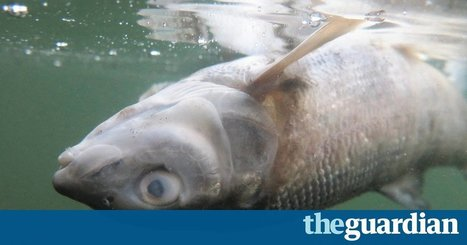 Yellowstone fish deaths: 183 miles of river closed to halt spread of parasite | Oceans and Wildlife | Scoop.it