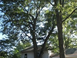 How To Keep Trees Healthy | Global House USA | landscapingservice | Scoop.it