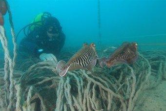 La Zone Marine Protégée de Cagnes est devenue le paradis des ...   La plongée sous-marine   Scoop.it
