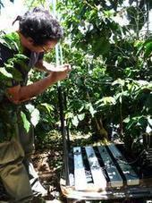 Mesure et modélisation des budgets de lumière, d'eau, de carbone et de productivité primaire nette dans un système agroforestier à base de caféier au Costa Rica. Parue en 2013 | l'agronomie              en thèses | Scoop.it