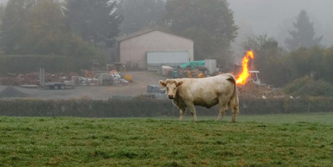 Farting Cows Cause Methane Explosion On German Dairy Farm | German learning resources and ideas | Scoop.it