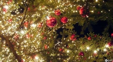 Comment choisir votre sapin de Noël | Méli-mélo de Melodie68 | Scoop.it