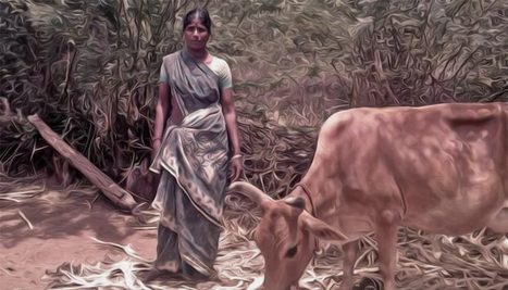 Changing the Way Milk is Produced in India by Empowering Women ... | Empowering Marginalized and Exploited Women in India | Scoop.it
