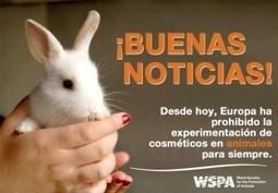 Europa Prohíbe venta de cosméticos probados en animales « News ... | Recursos sobre medio ambiente | Scoop.it