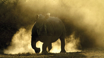 Tourism interests come to aid of rhino rescue - Travel Weekly | Rhino | Scoop.it