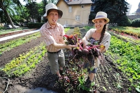 """Reclaim Urban Farm is """"intentionally political"""" in boosting local food (with recipe) 