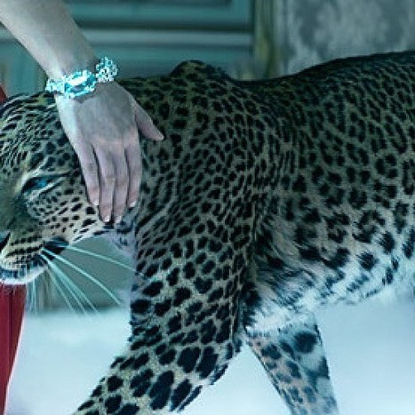 Cartier Video Advert | ADMAREEQ - Quality Marketing and Advertising Campaigns Blog | Marketing&Advertising | Scoop.it